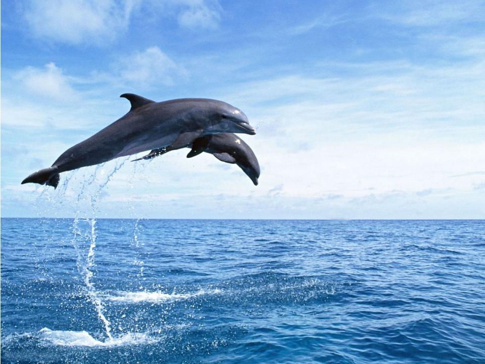 Дельфины Фото В Море