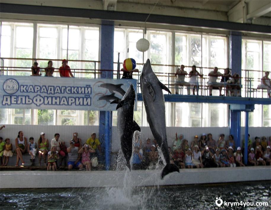 Карадагский дельфинарий Крым фото 1