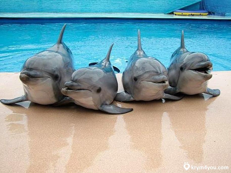 Карадагский дельфинарий Крым фото