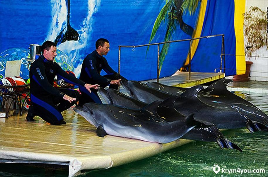 Партенитский дельфинарий Крым фото 1