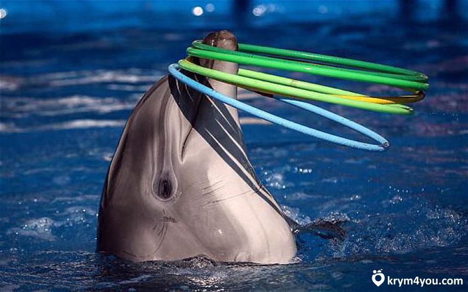 Партенитский дельфинарий Крым фото