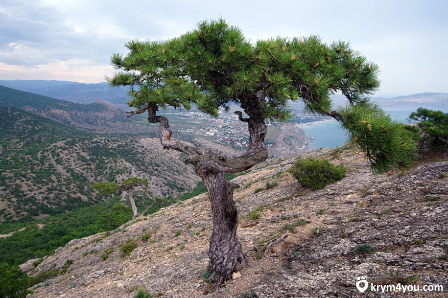 Крым Гора Сокол