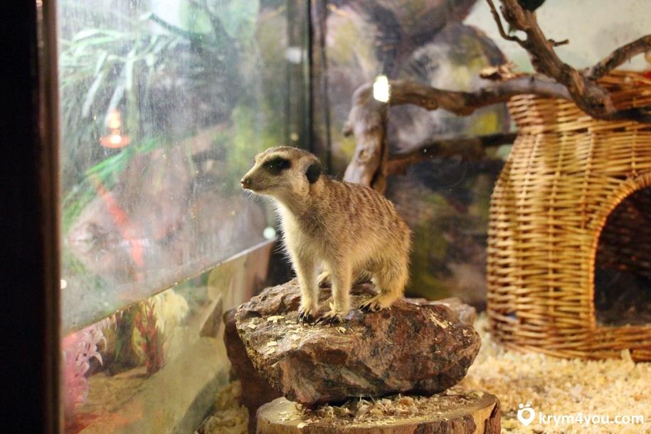 Зоопарк в Евпатории