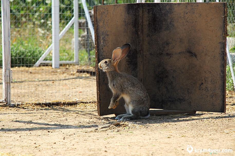 Кроликопарк в Крыму
