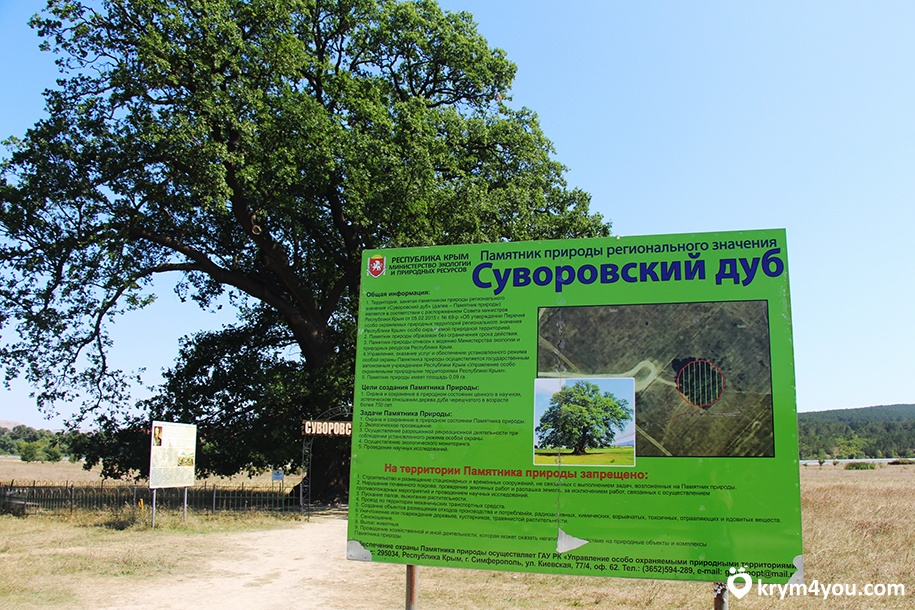 Суворовский дуб