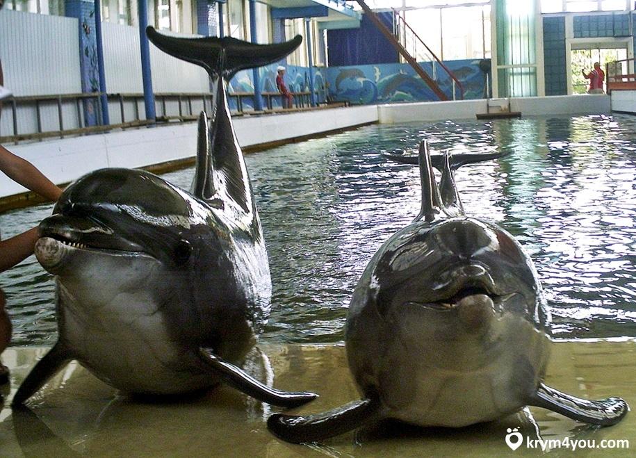 Карадагский дельфинарий Крым фото 2