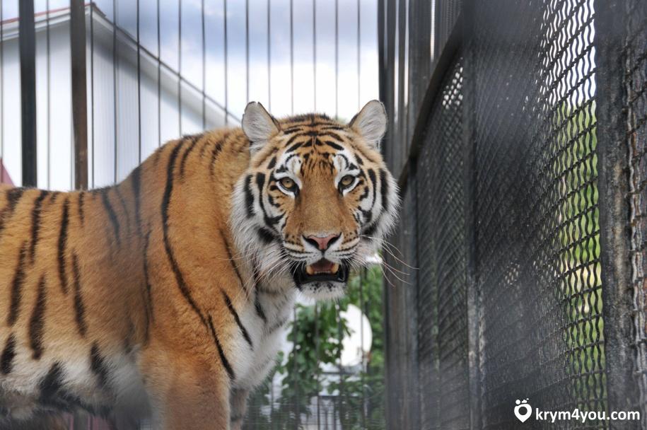 Ялтинский зоопарк Крым