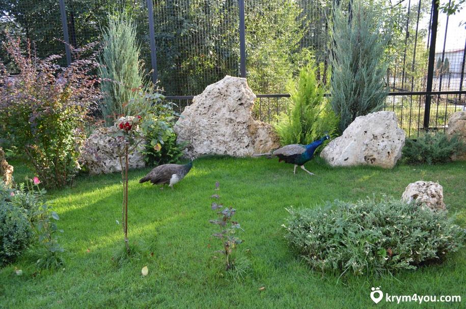 Сафари парк тайган питомци