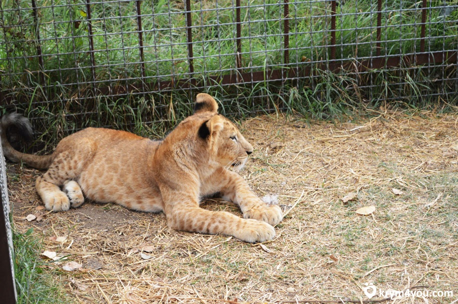 Сафари парк Тайган животные