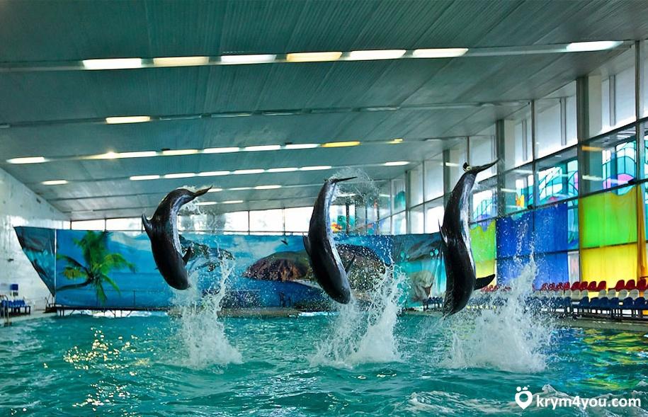 Партенитский дельфинарий Крым фото 2