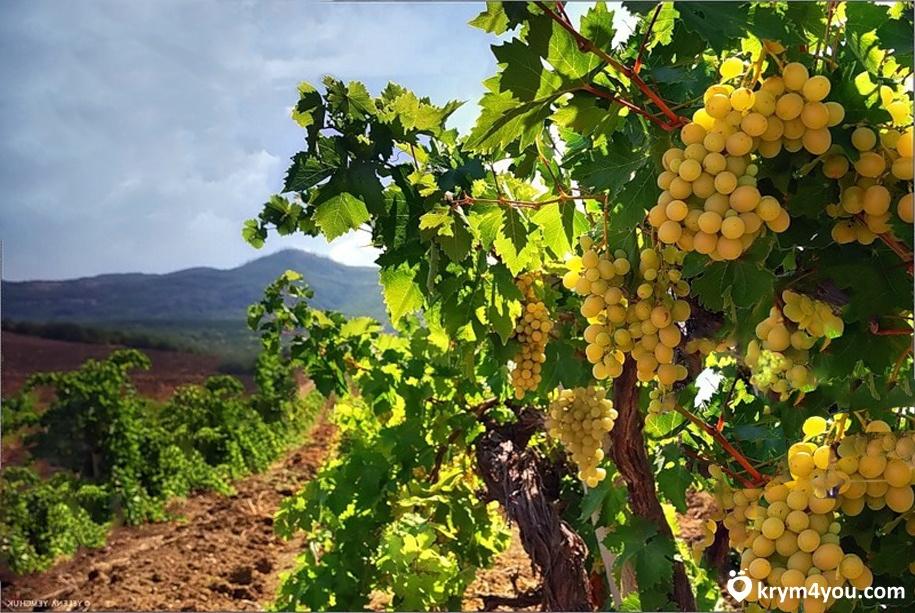 Завод шампанских вин «Золотая Балка» Крым фото 2