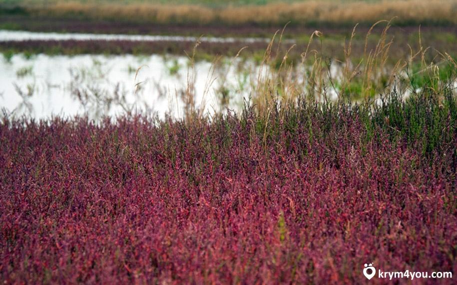 Крым Айгульское озеро фото