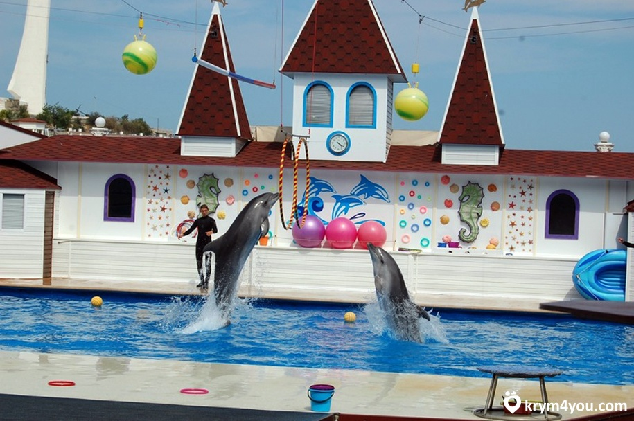 Севастопольский Дельфинарий 2