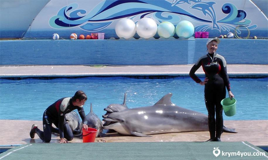 Севастопольский Дельфинарий 1