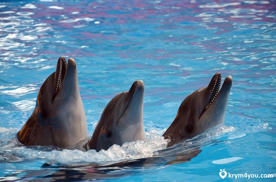 Дельфинарий в Алуште 1