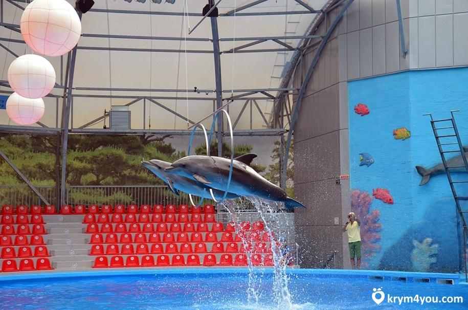 Дельфинарий в Алуште 2